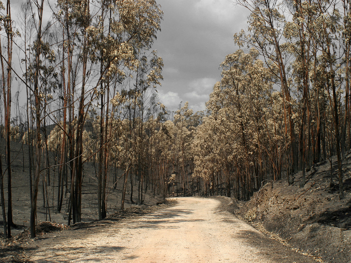 Coroner finds AusNet Services could have prevented one of the 2009 Australian fires.