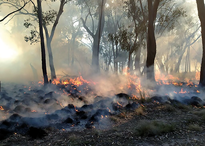 A prescribed burn in St Andrews, Victoria, which was used to assess how the 'structure from motion' technology assessed fuel loads pre and post-fire.