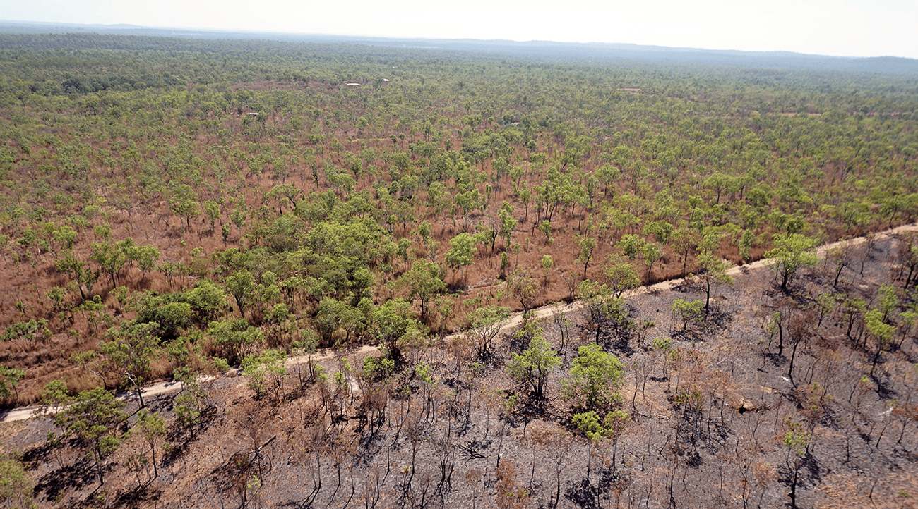 Gamba grass-infested country near Batchelor, Northern Territory, August 2015.
