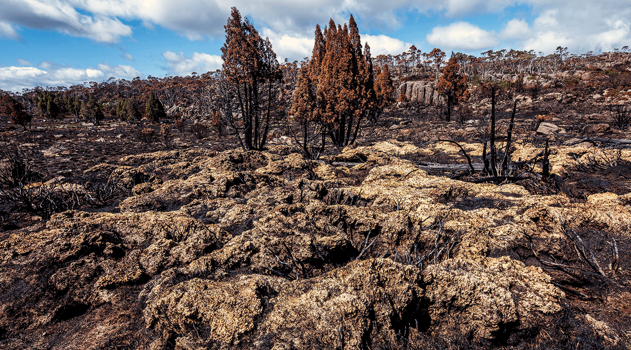 Scorched areas near Lake Mackenzie at an altitude of about 1200 metres, after lightning strikes triggered fires on January 13.